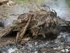 Corroded Roots