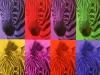 Ann DeLucia: Compound Zebras