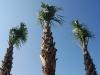 Palm Tykes