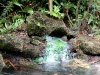 Washington Oaks Gardens State Park, Palm Coast, Florida