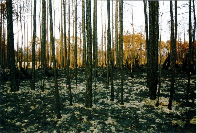 An image from the 1998 wildfires that caused a total evacuation of Flagler County. The Florida Forest Service is =marking the fires' 20th anniversary. (Bob Pickering, Flagler County Emergency Management)