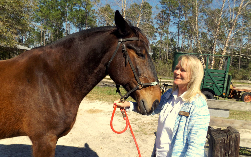 """Florida Agricultural Museum executive director Kara Hoblick says the horse Kaleb, who can be ridden by museum patrons, is """"a big teddy bear. He is the perfect horse if somebody is timid about horses at all."""" Kaleb and the museum's other nine horses, as well as the ones boarded at the museum by private citizens, have a new horse arena where they can give rides along with the facility's trails. (© FlaglerLive)"""