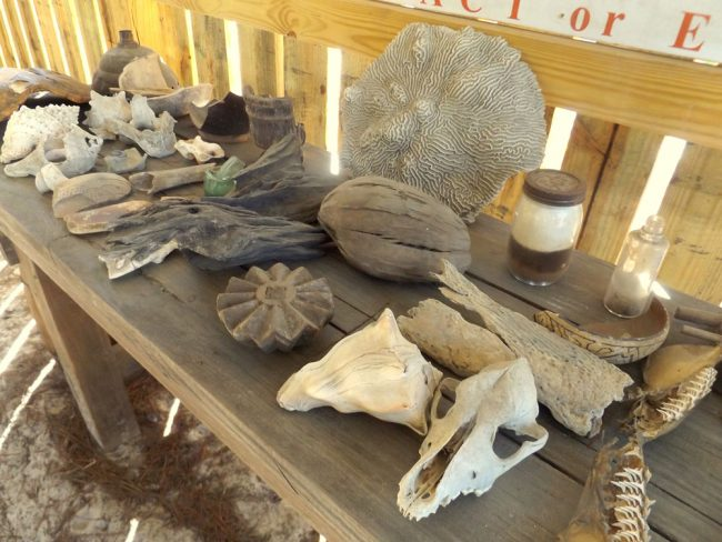 Participants in Dirt Detectives, a program offered by the Florida Agricultural Museum's new complex, the Old Florida Museum, will be treated to hands-on exploration of skulls, bones, Indian pottery, ancient seashells and other artifacts. (© FlaglerLive)
