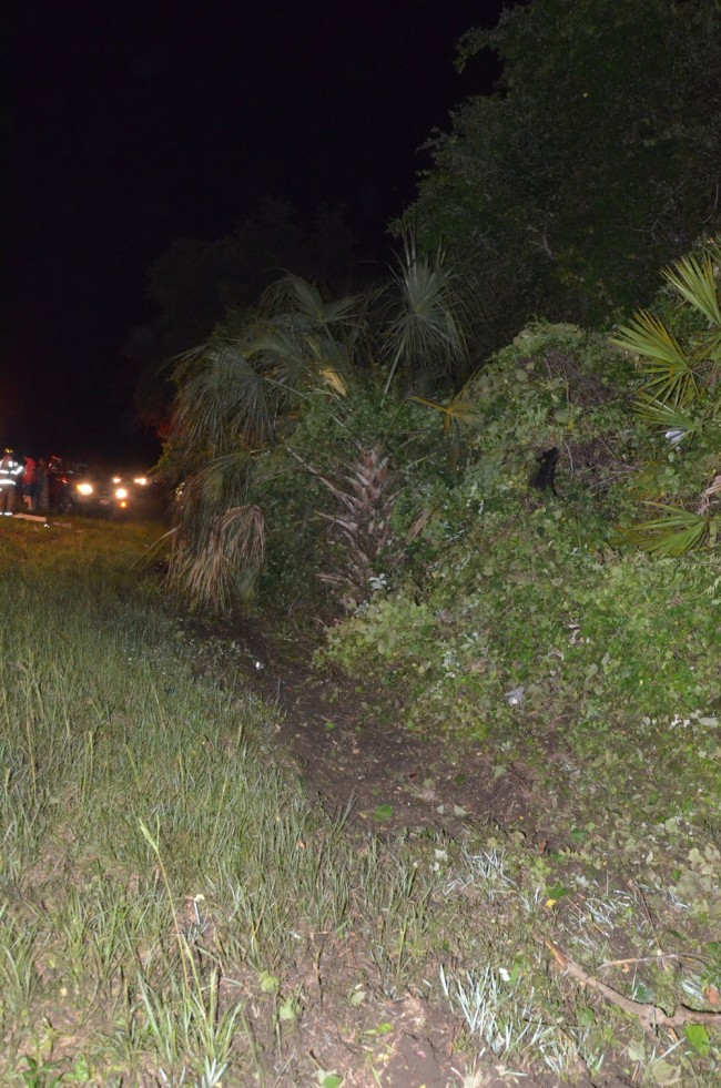 The Hyundai struck a gash and went airborne over a palm tree and other brush, landing on the other side of the palm tree. Click on the image for larger view. (© FlaglerLive)