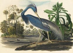 flagler audubon