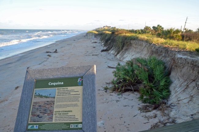 Two beach cleanups this weekend: One in Flagler Beach, one around Varn Park (above). See below. (© FlaglerLive)