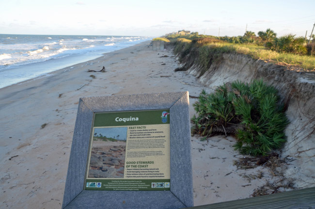 flagler county government beach restoration