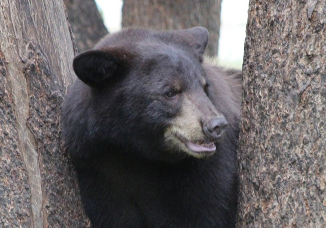 black bear florida hunt