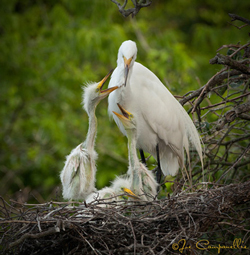 Joe Campanellie's 'Birds of a Feather.'