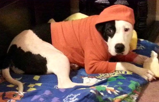 Boomer is among the innumerable Flagler Humane Society alumni who found a home in 2014. (FHS)