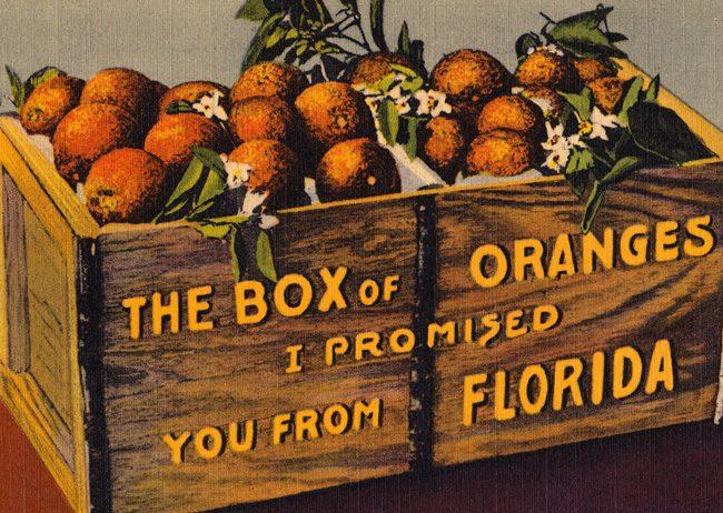 florida citrus lost history