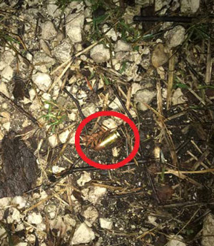 A bullet retrieved at the scene of the alleged armed robbery on Armand Beach Drive in the Hammock Tuesday night. (FCSO)