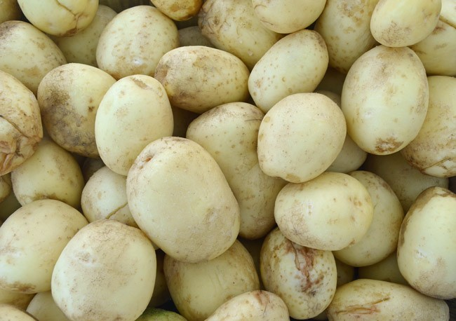 The Bunnell Festival is back: what was once known as the Bunnell Potato Festival takes the stage again Saturday all day near the old courthouse in Bunnell. (© FlaglerLive)