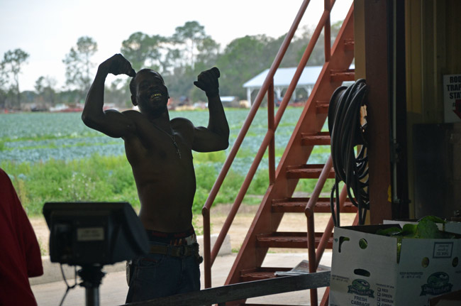 A cabbage-packer at Flagler County's Hollar & Greene packing plant. (© FlaglerLive)
