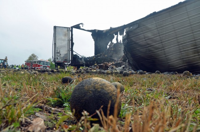 Barbecued cantaloupe littered the shoulder of I-95. Click on the image for larger view. (© FlaglerLive)