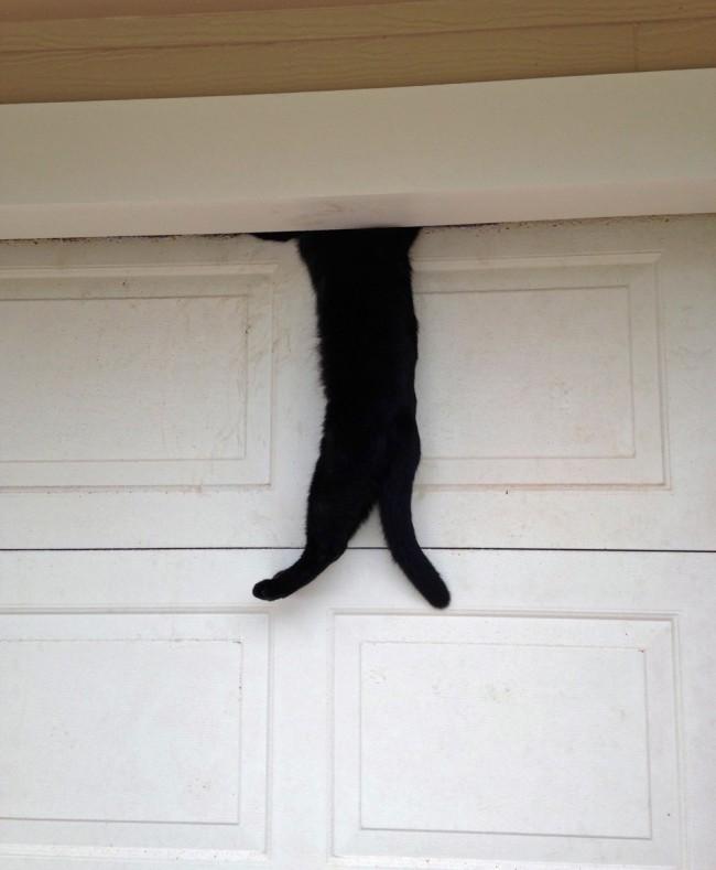 cat garage rescue