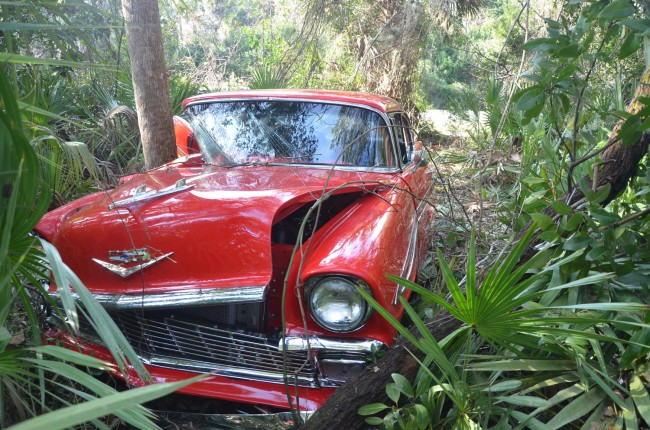 The Chevy Bel-Air dug a 20-yard path through the woods before trunks and brush stopped it. Click on the image for larger view. (© FlaglerLive)
