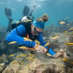 A diver prepares a site for staghorn coral replanting by removing nuisance algae. (Coral Restoration Foundation)