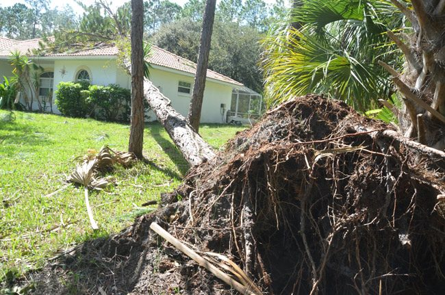 It's all about debris removal: a house on Postwood Lane in Palm Coast the day after the storm. (© FlaglerLive)