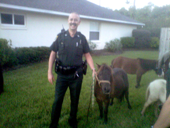 Deputy Joe Delarosby was able to rope one wandering pony palm coast