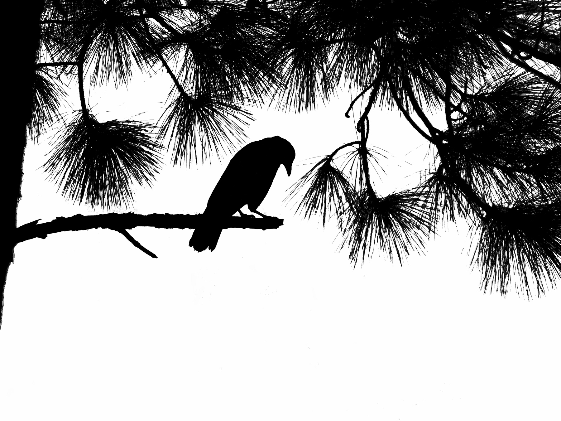 """""""Mr. Crow in Mourning,"""" photographic digital art printed on canvas, by Rick de Yampert"""
