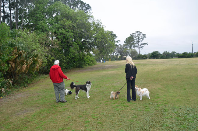 Twp people with fove dogs between them were out of luck as they kept away from the dog park at Wadsworth Park, in Flagler Beach, this afternoon. (© FlaglerLive)
