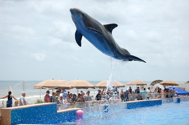airborne dolphin at marineland