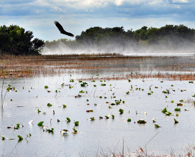 Environmentalists say looming development plans might make it harder for the state to buy land important for Everglades Restoration. (Len 'Doc' Radin)