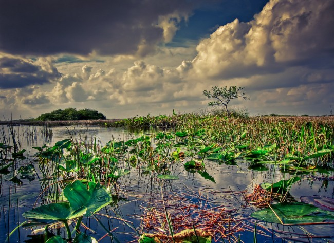 If Amendment 1 passes, money would be set aside to ensure protection for sensitive lands and water, such as the Everglades. (Kim Seng)