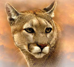 extinct cougar