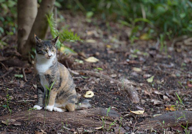 feral community cats
