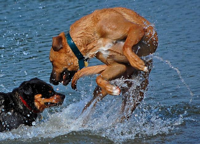 Flagler Beach Florida Dog Rules