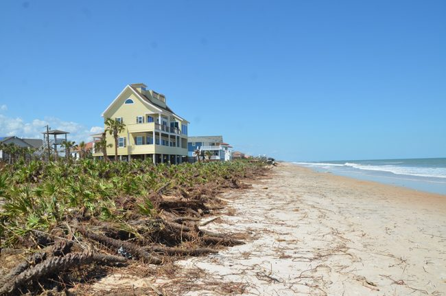 Flagler County's beaches have been severely eroded by storms, their dune systems erased in some places, as in the area of Marineland Acres, above. (c FlaglerLive)
