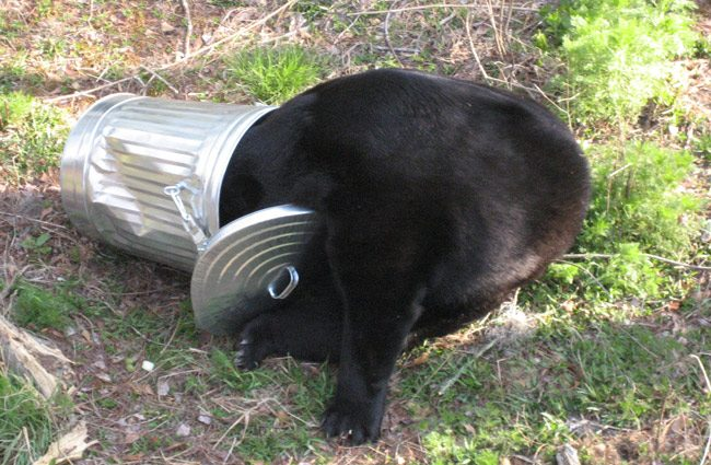 florida black bear hunting proposal