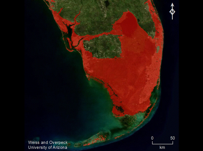 If a large part of the Greenland Ice Sheet melts, the impacts will be enormous. Red areas in this image of southern Florida show locales with elevations at or below five meters and connected to the sea. (University of Arizona)