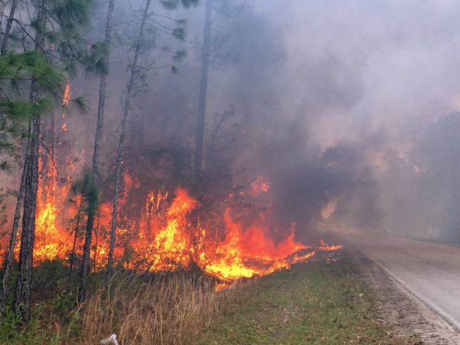 The scene at a recent fire in Flagler County. (Forest Service)