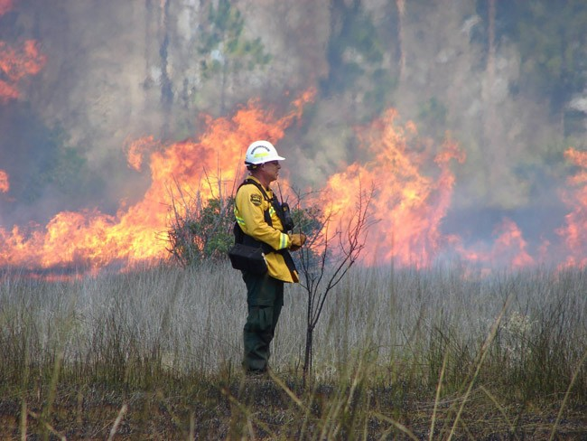 florida forest service wildfires