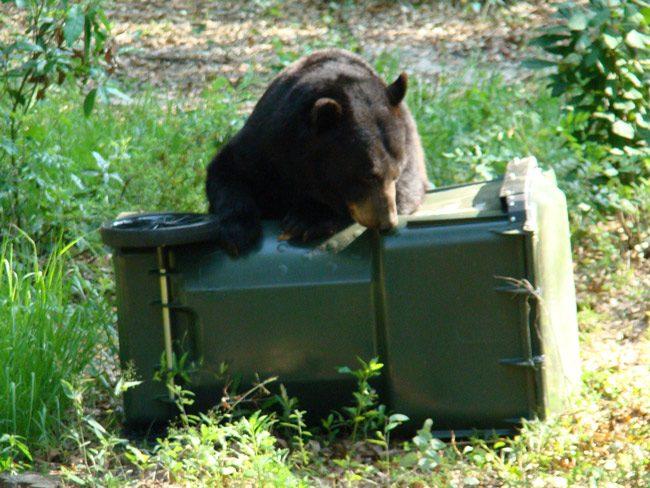 florida bears