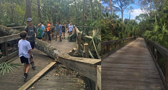 The before-and-after view of the Graham Swamp trail today, as volunteers chiefly made up of FPC's track and field team got to work cleaning it up. Click on the image for larger view. (Milissa Holland for FlaglerLive)