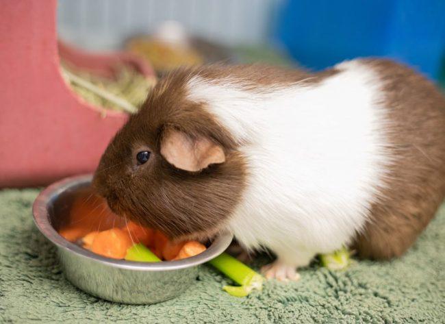 animal control adoptions