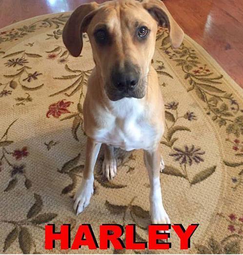 harley found