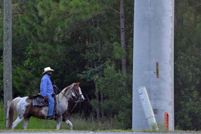 A horseman rode by the scene as investigators worked it. If anyone can identify him, we'd appreciate it. Click on the image for larger view. (© FlaglerLive)