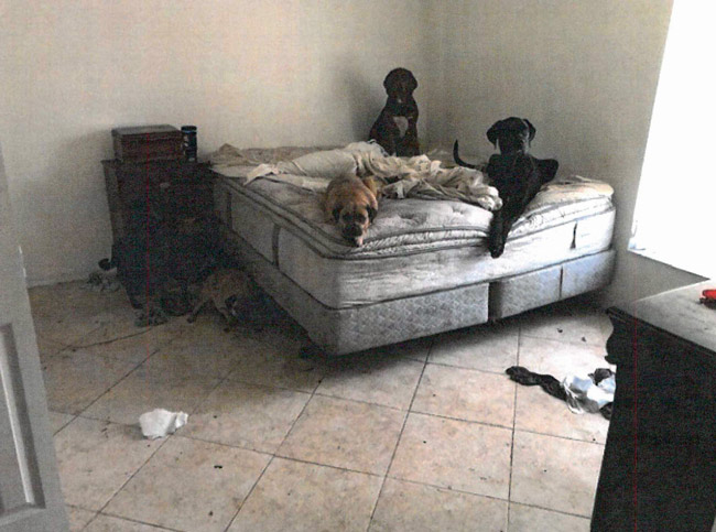 A bedroom at 12 Waywood Place in one of numerous images included in the animal control report.