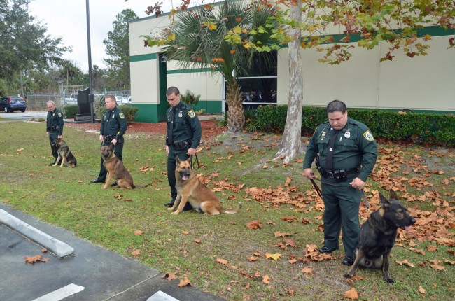 The Flagler County Sheriff's K-9 units. Click on the image for larger view. (© FlaglerLive)