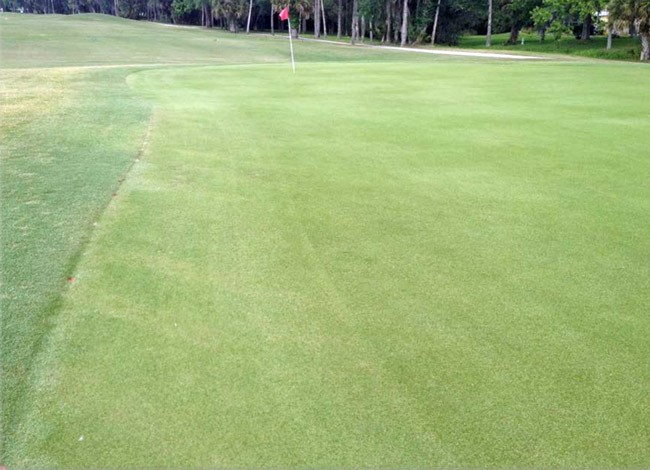 One of the many images KemperSports, the management company running the Palm Harbor Golf Club, used this morning to illustrate course improvements. See below.