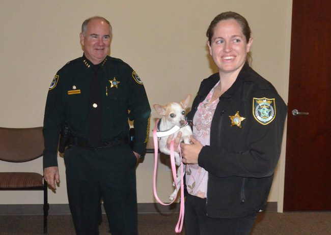 Sheriff Rick Staly with Detective Fiona Ebrill, who is assigned exclusively to domestic violence cases, with a new arrival at the Sheriff's Office--Khaleesi, a therapy dog that helps victims of domestic violence. (© FlaglerLive)