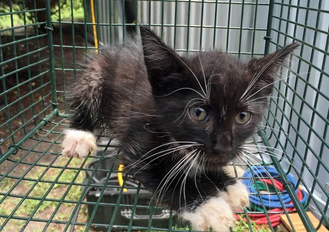 kitten rescue walmart