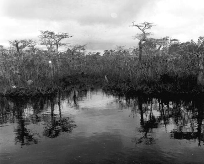 The River Styx runs through Finch Country: Liberty County. (State Archives of Florida)