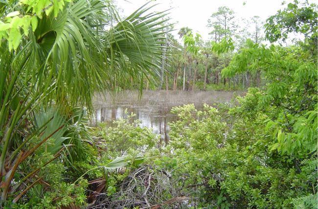 The Long Creek Preserve.