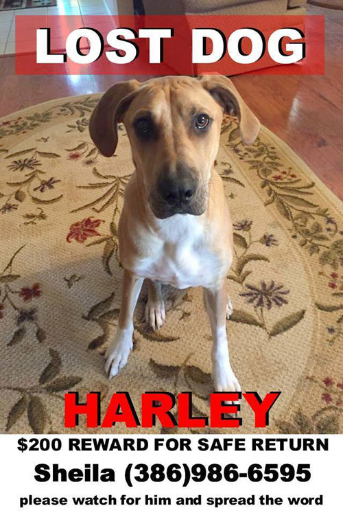 lost-dog-harvey